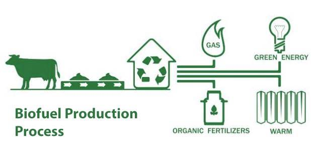 إنتاج الوقود الحيوي